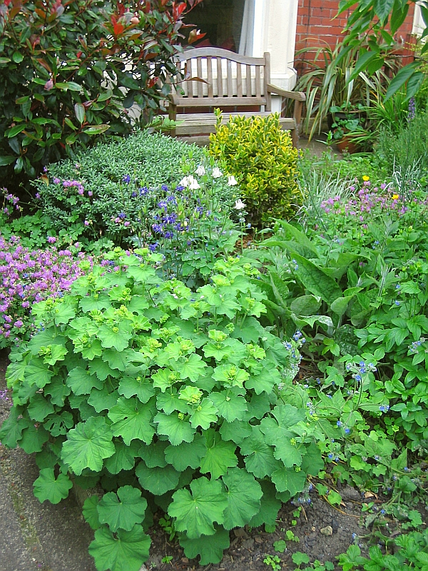 The natural front garden